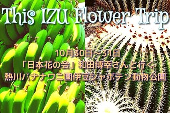 10月30+31日 This IZU.Flower Trip 〜