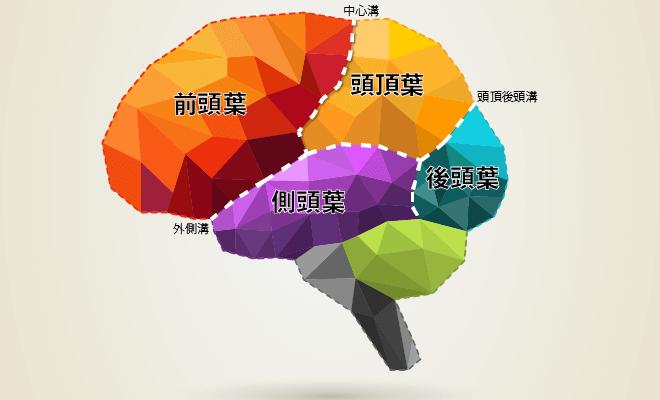 側頭葉と前頭葉.png