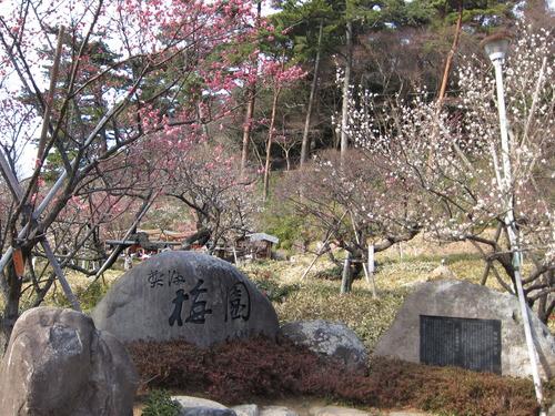 梅園入口の庭園(120221).JPG